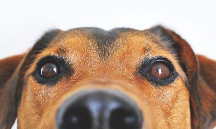 June: Pet & Animal Preparedness Month